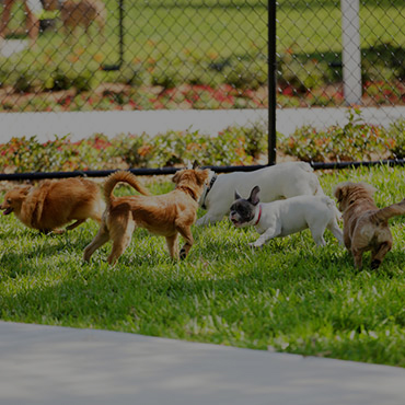 Large Dog Park at Camden at Bloomingdale Apartments